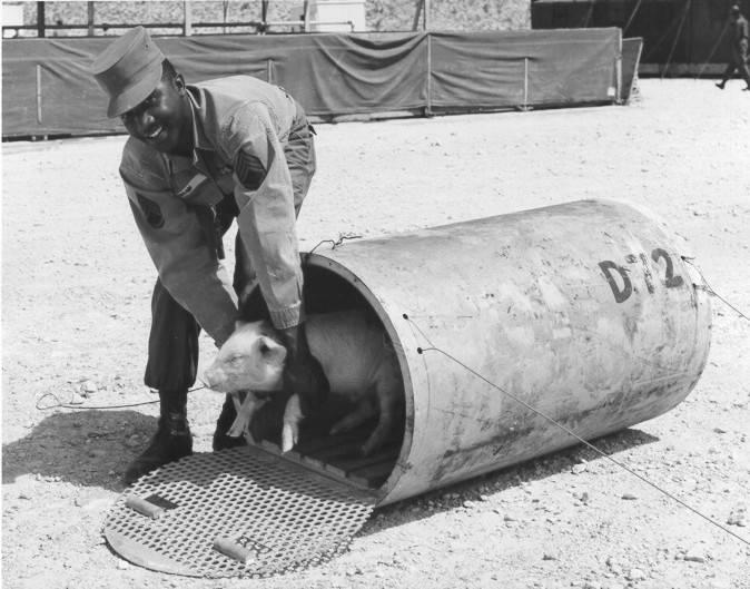 pig-in-atomic-test
